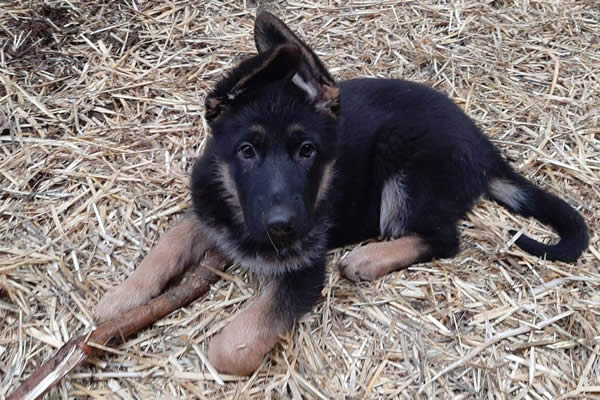 Puppy Group Training and Tracking